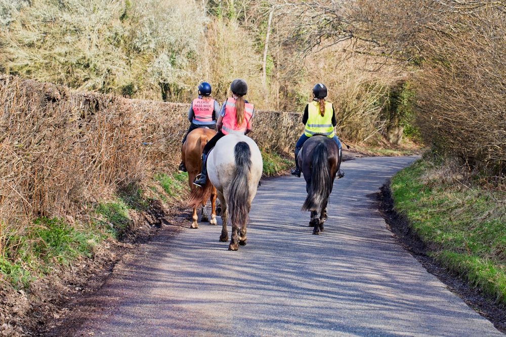 DVSA Syllabus Horses on road